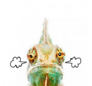 Calefacción para Reptiles y tortugas