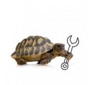 Mantenimiento para Reptiles y tortugas
