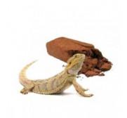 Sustratos para Reptiles y tortugas