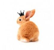 Especial conejos